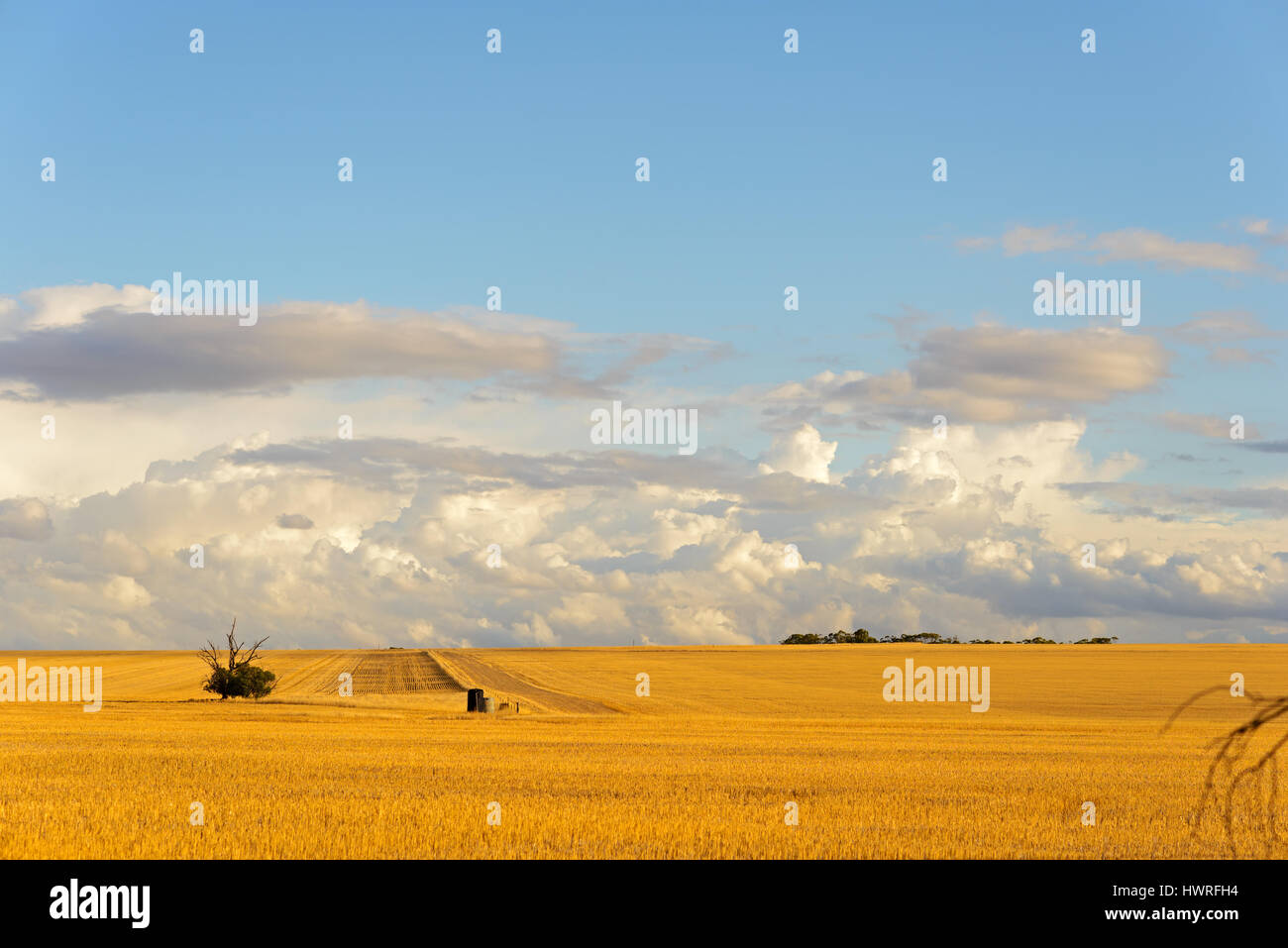 Wheatbelt of Western Australia, Harvested fields, Australia - Stock Image