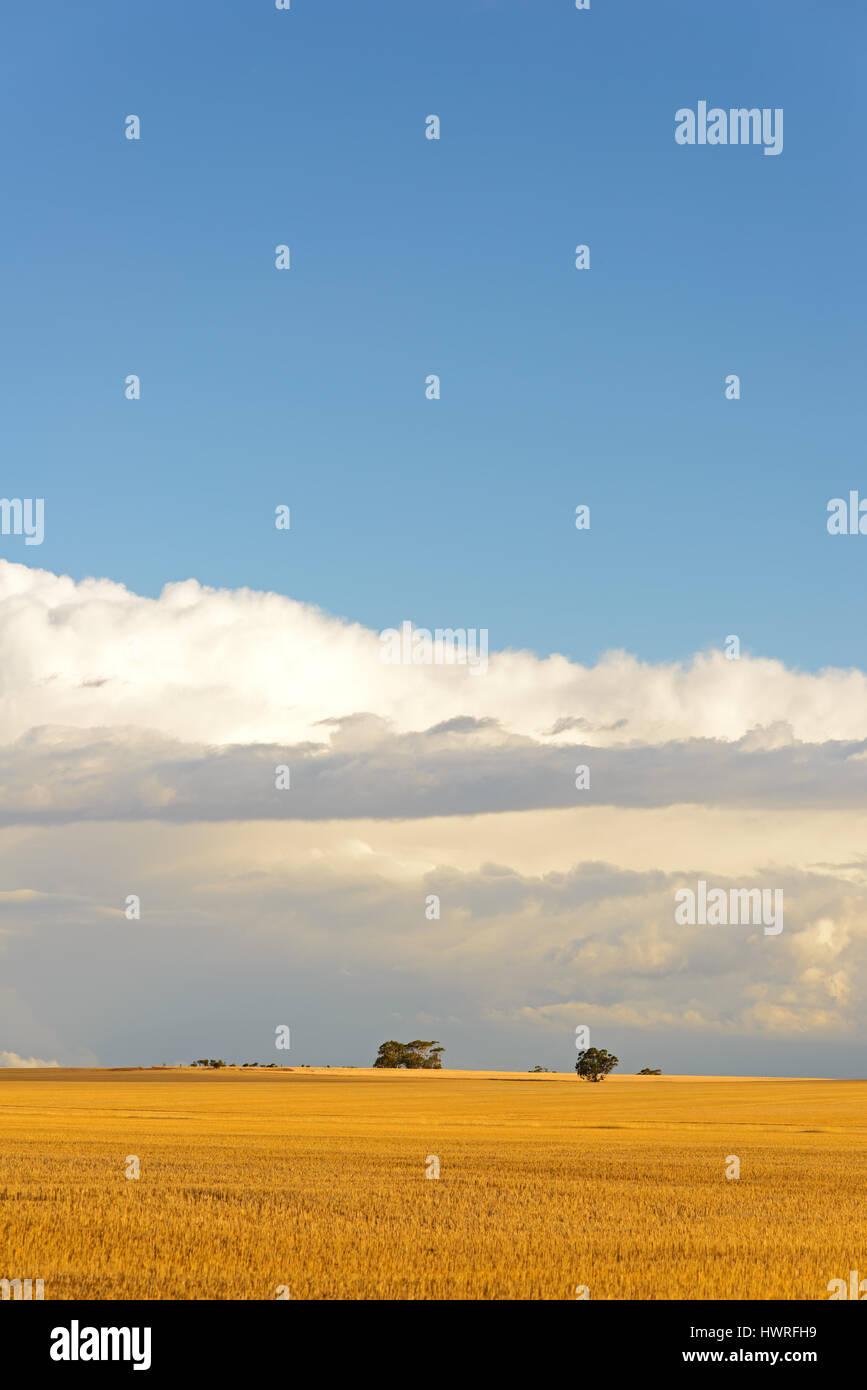 Harvested fields, Wheat belt, Western Australia, Australia - Stock Image