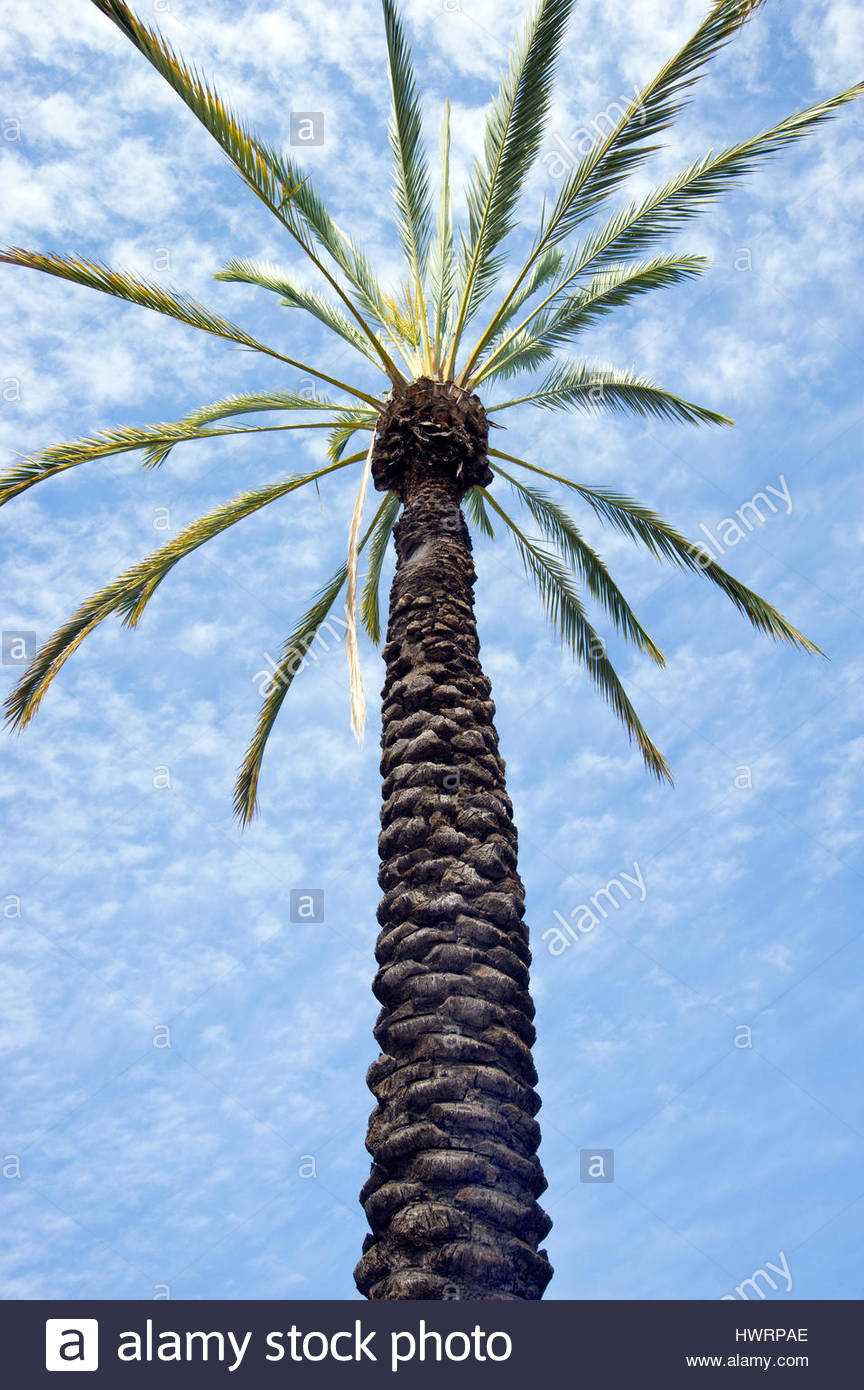 Palm tree in the mission district of San Gabriel, California Stock Photo