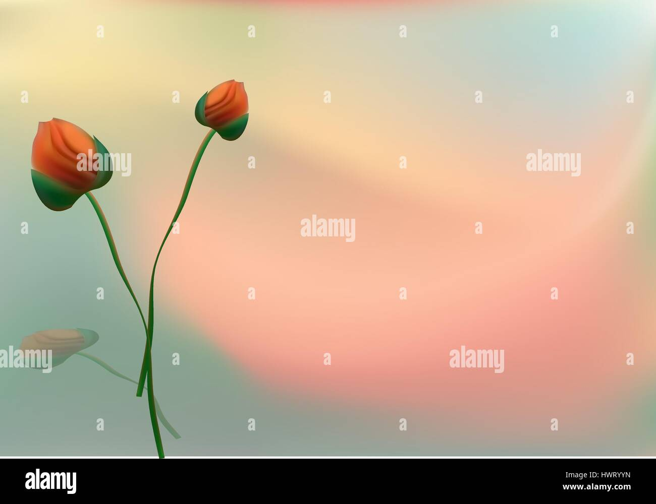 The flowers of red poppy closeup on grey background. - Stock Vector