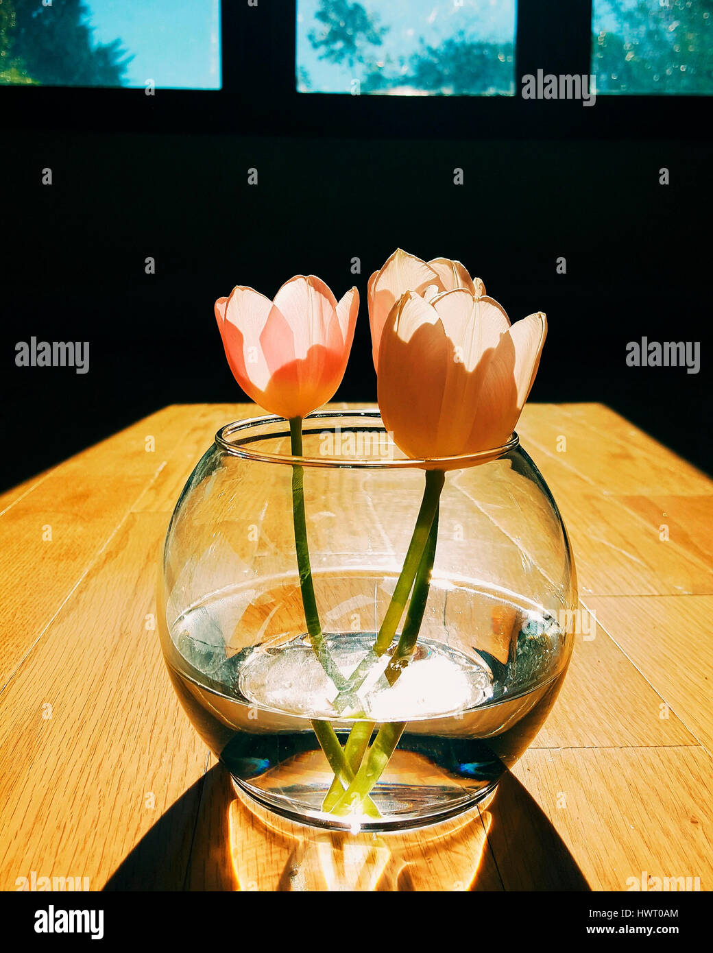Tulips in vase on wooden table - Stock Image