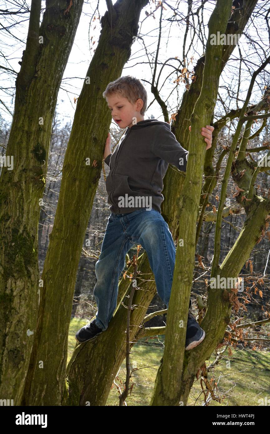 Little blond boy climbs on tree in sunlight - Stock Image