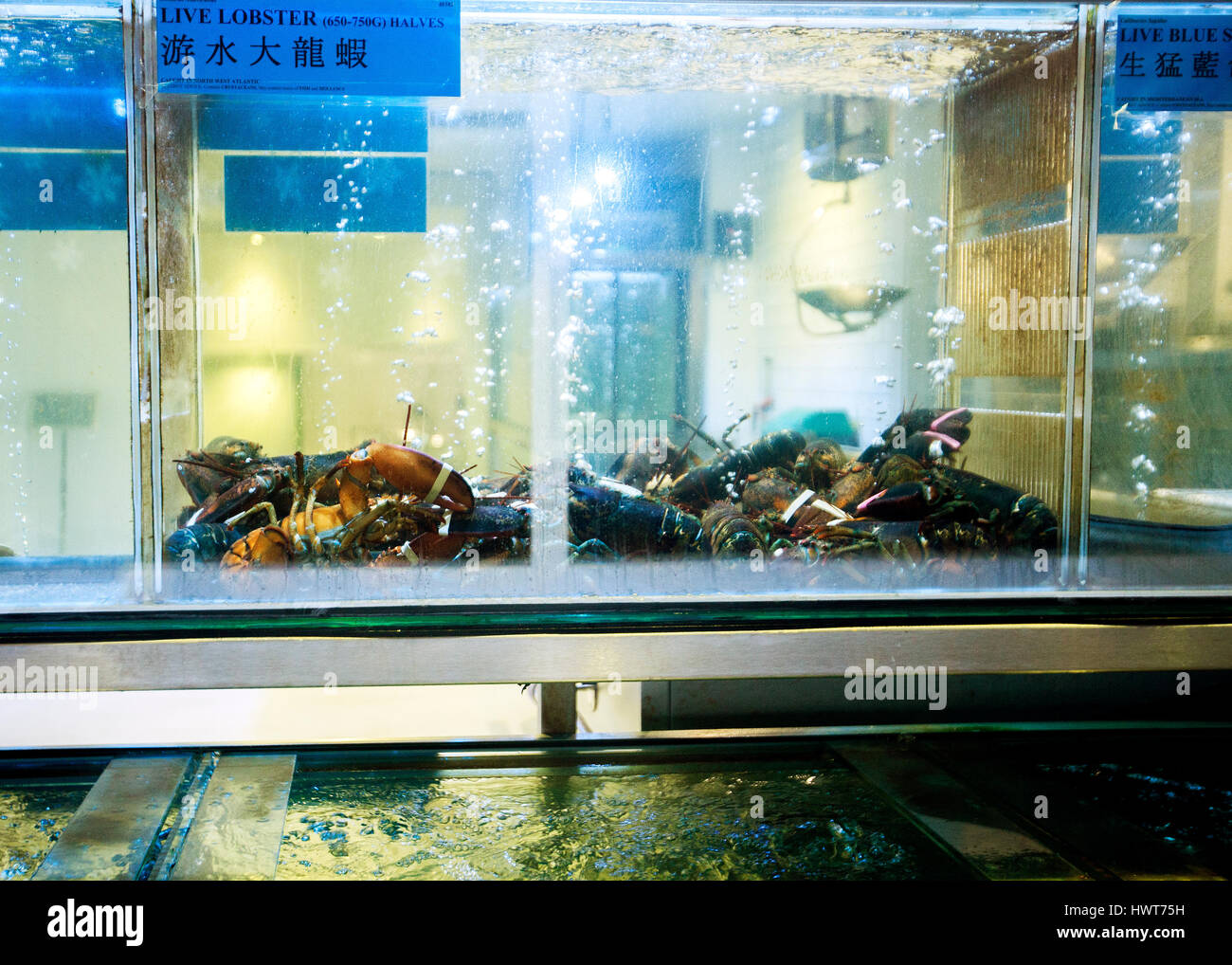 lobsters alive in restaurant fish tank china town London - Stock Image