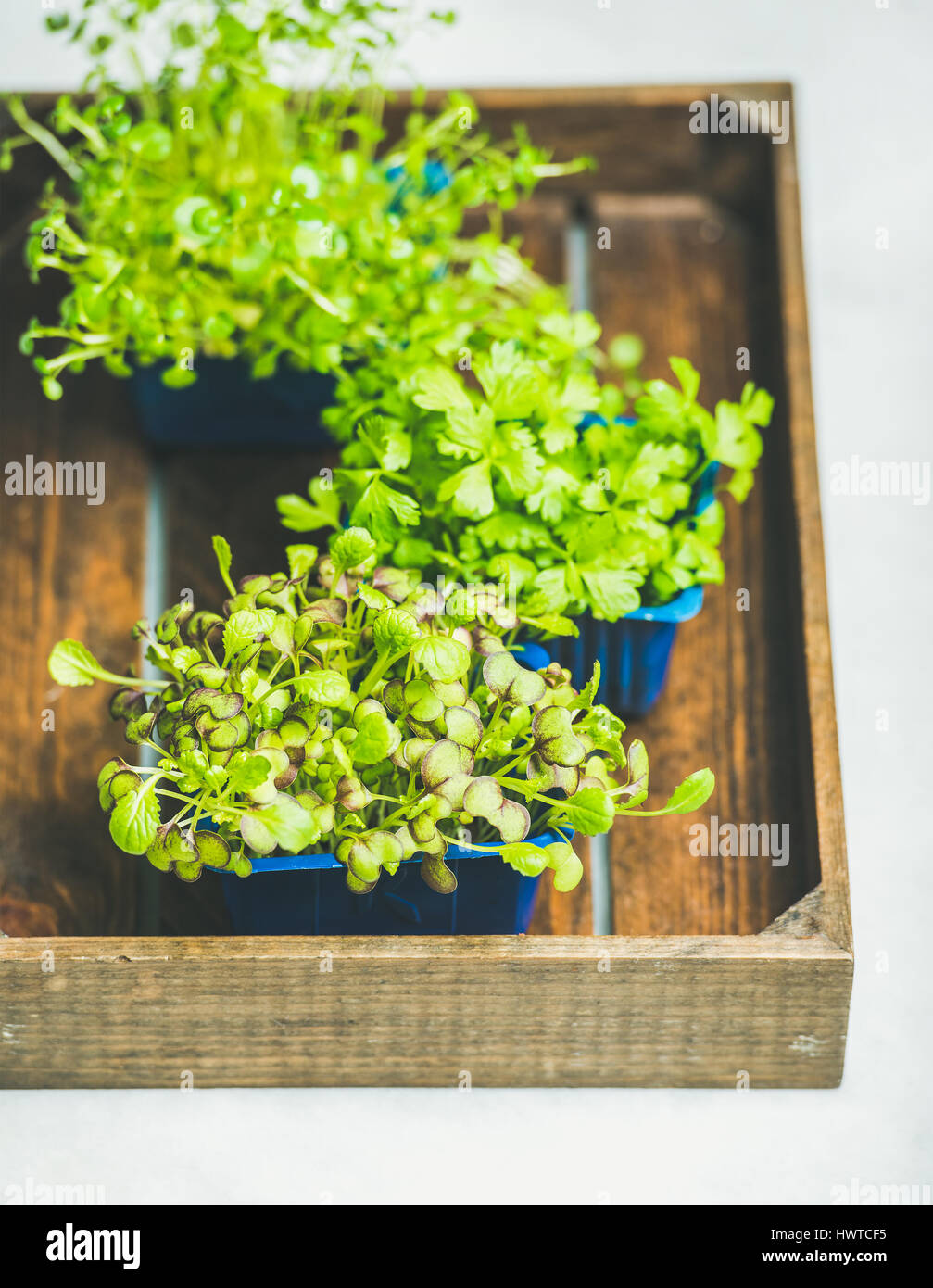 Radish kress, water kress and coriander sprouts in wooden box - Stock Image