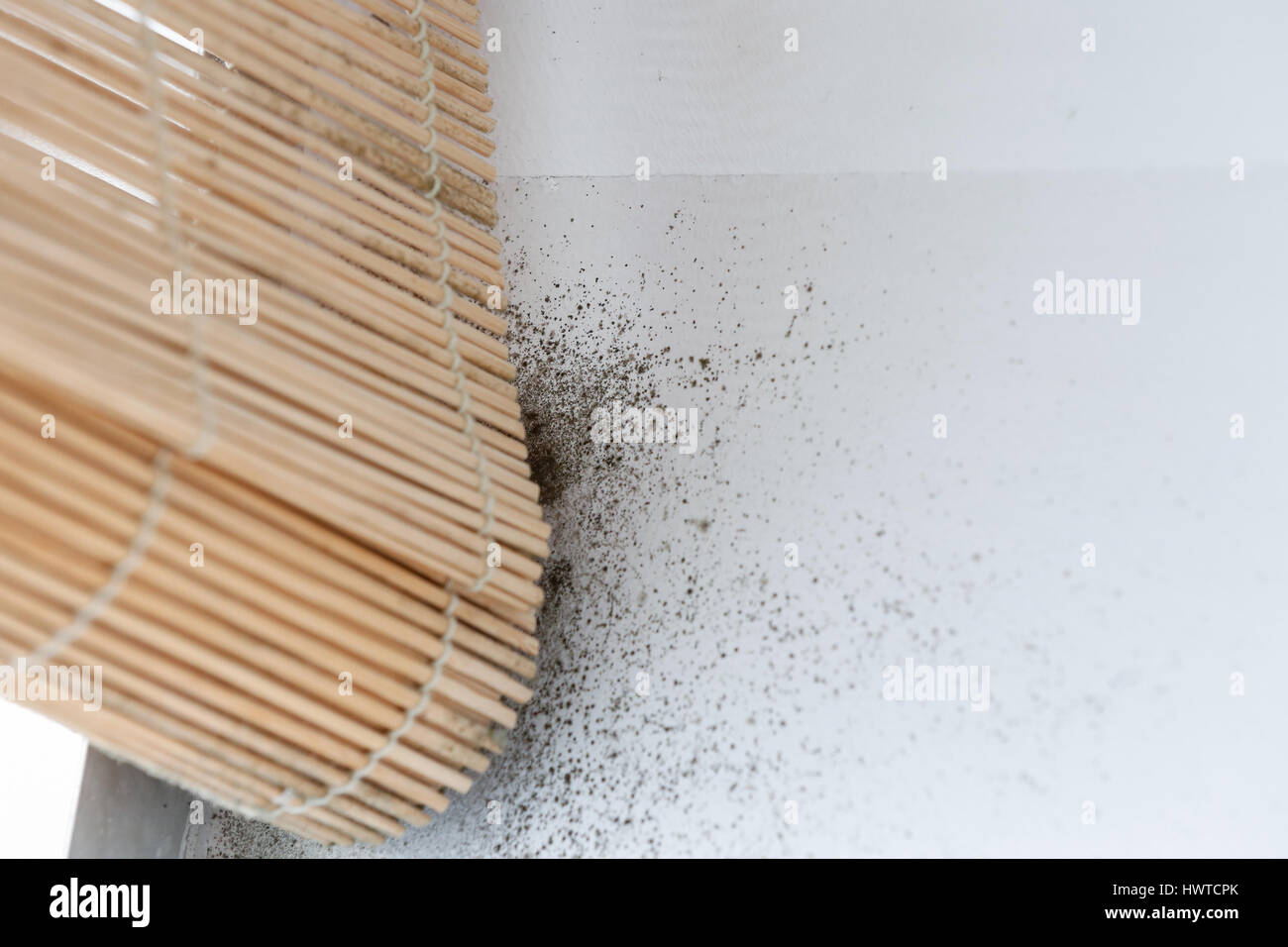 A wall with harmful, spreading black mold around the window blinds. Unhealthy living conditions, humid home concept. - Stock Image
