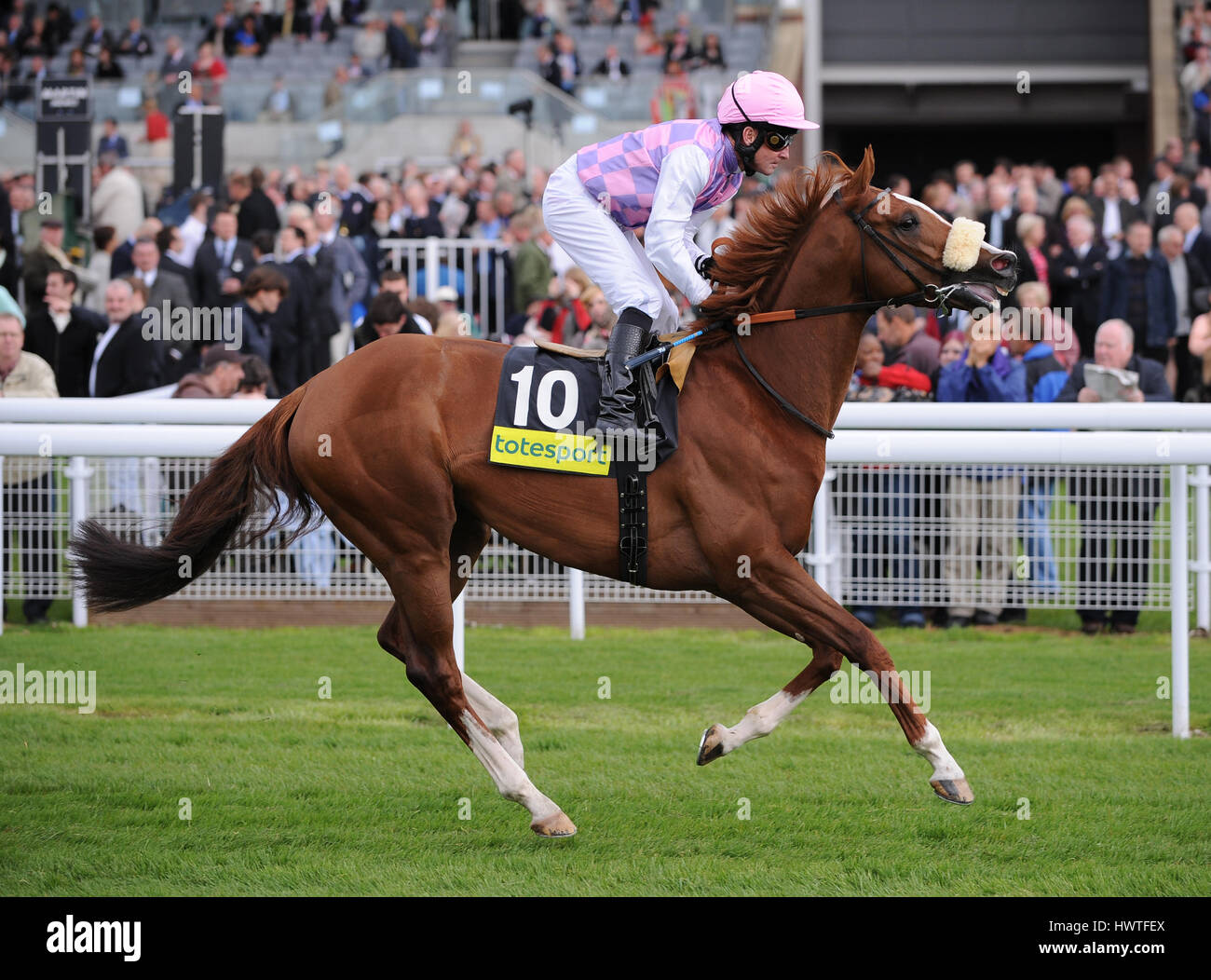 SANS FRONTIERES RIDDEN BY M.KINANE YORK RACECOURSE YORK ENGLAND 14 May 2009 - Stock Image