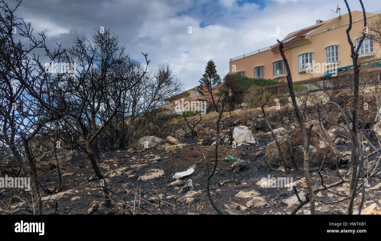 A building with a view to burn trees in the front of mauntain - Stock Image