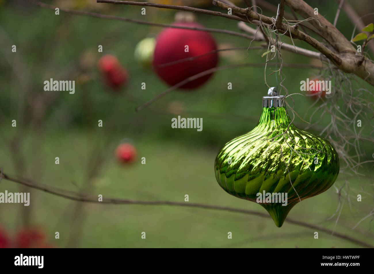 red and green christmas ornaments adorn a small tree outdoors stock image