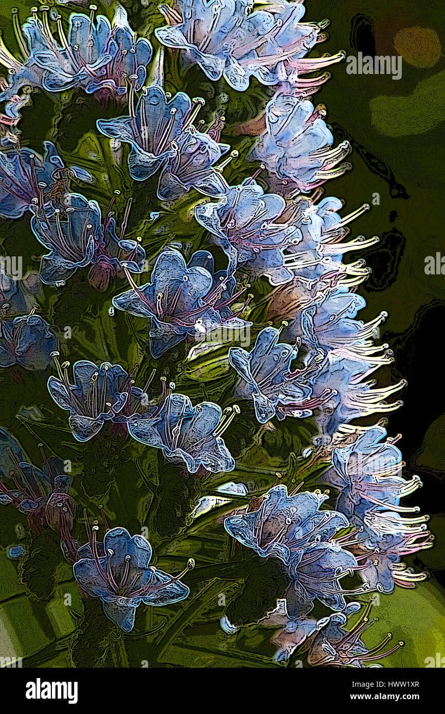 Photoshop enhanced close up detail of back lighting on blue flowering plant - Stock Image