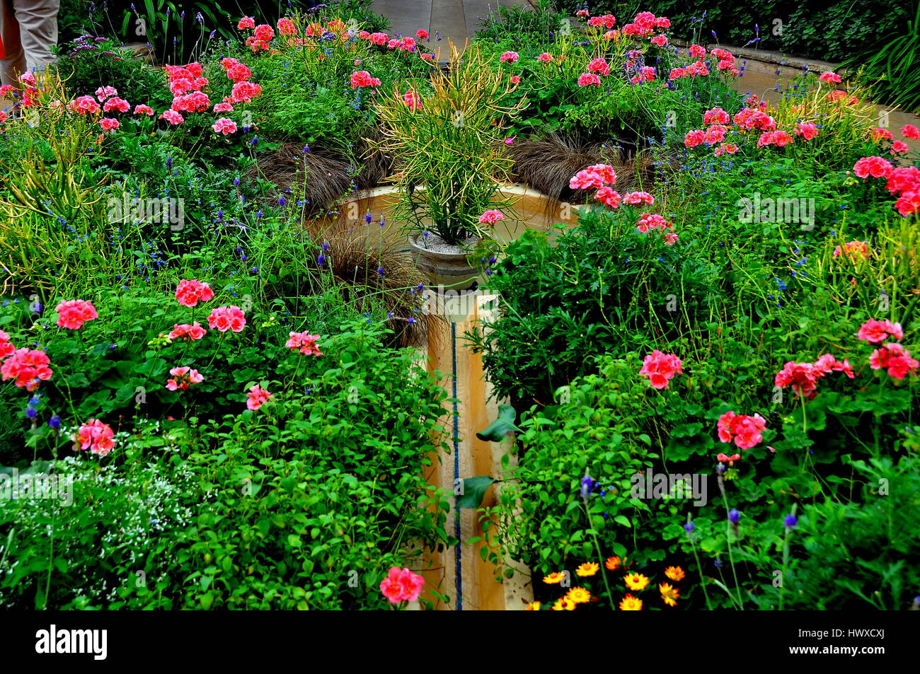 Kennett Square, Pennsylvania - JUne 3, 2015: Pink Geraniums encircle a small fountain in the Longwood Gardens Conservatory - Stock Image