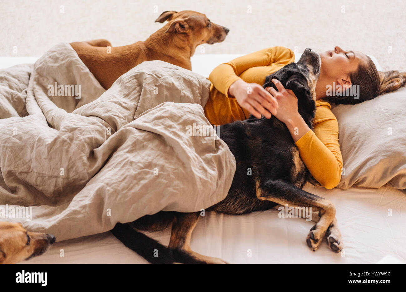 Woman lying in bed with her dogs - Stock Image