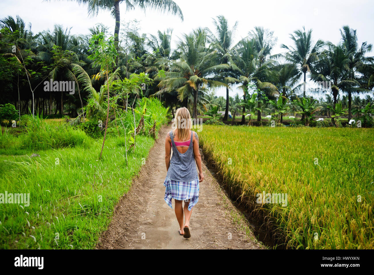 Indonesia, Java, back view of woman walking on dirt track through rice fields - Stock Image