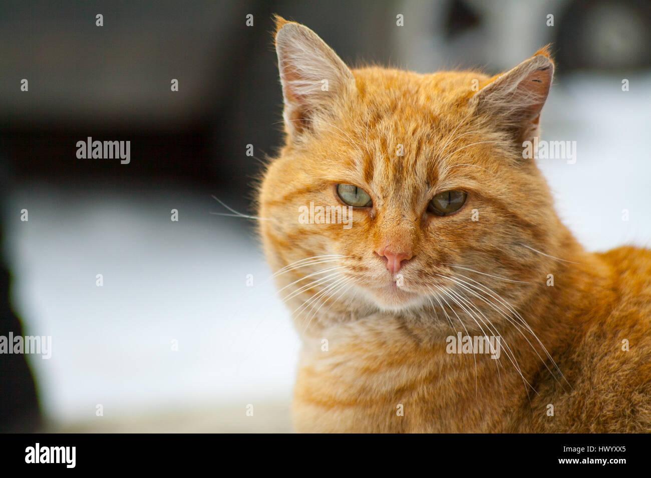 Street Cat Named Bob Cardiff