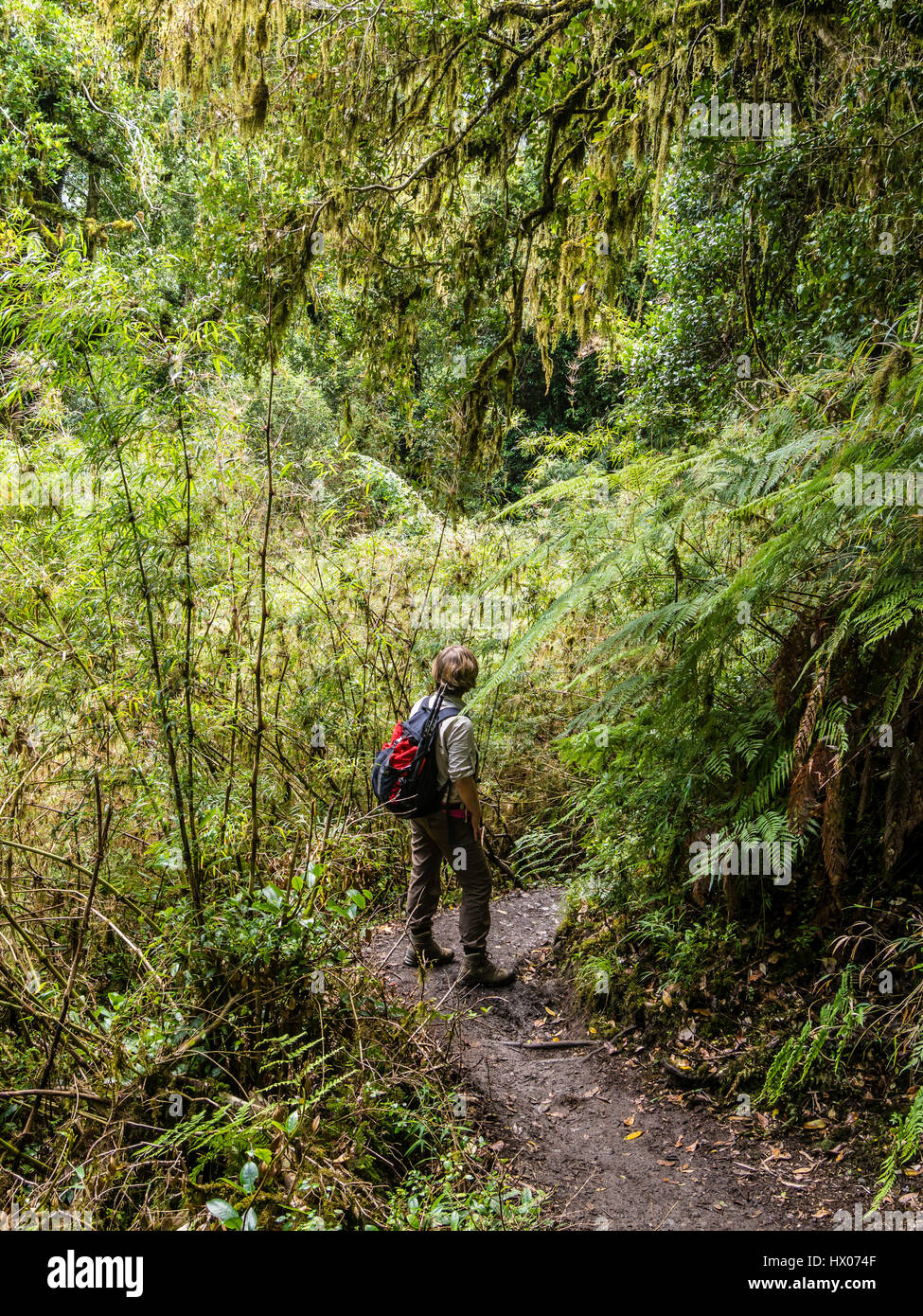 Woman on path in rain forest, trail to viewpoint at Ventisquero Colgante (hanging glacier),  Park Quelat,  near Stock Photo
