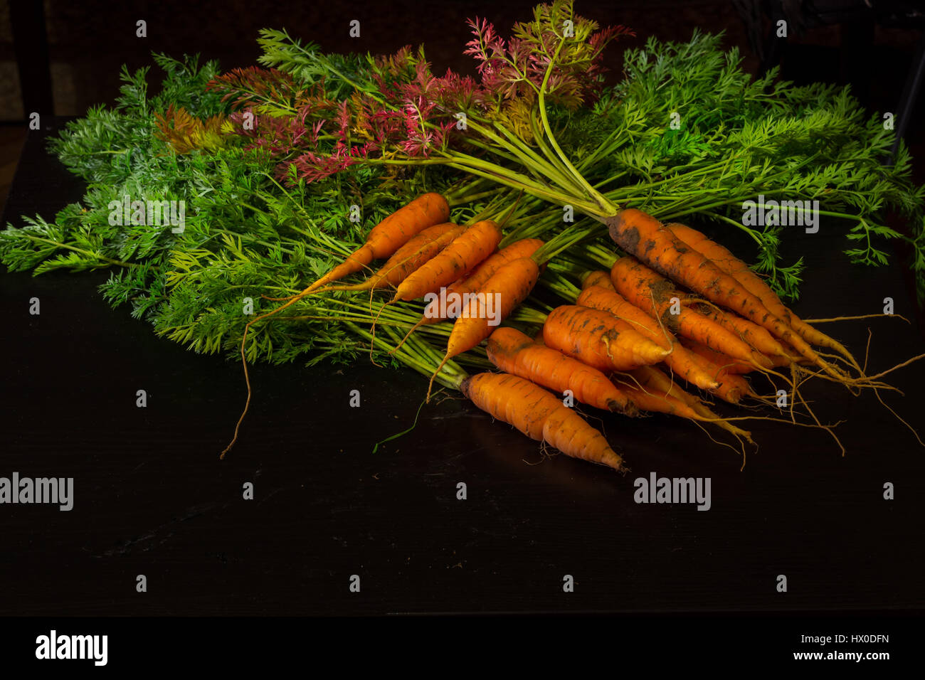 Fresh, farmer, young carrots with a beautiful tops on a black painted wooden background - Stock Image