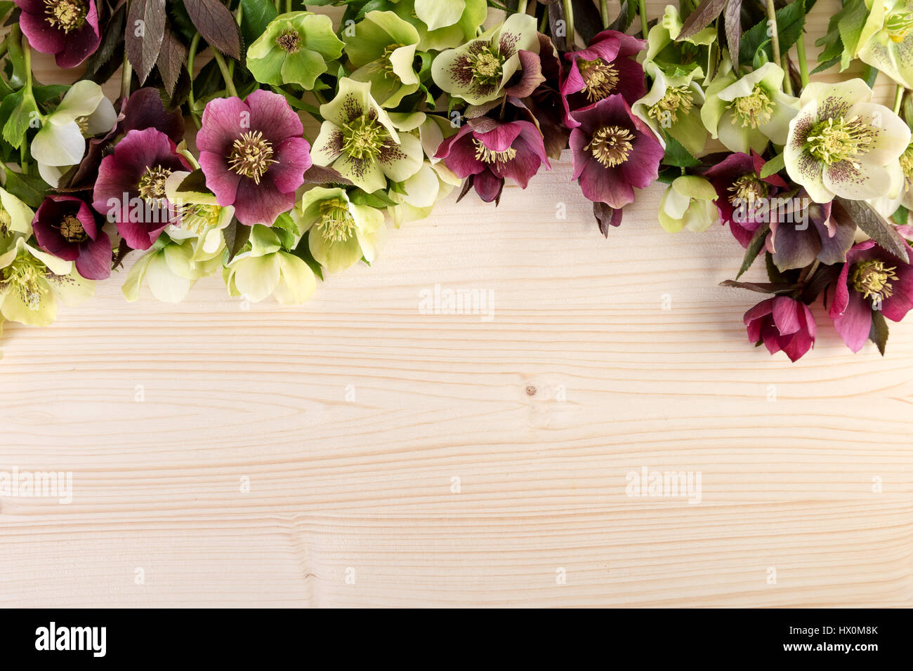 Spring Flowers Pastel Color Natural Background Lenten Roses Over