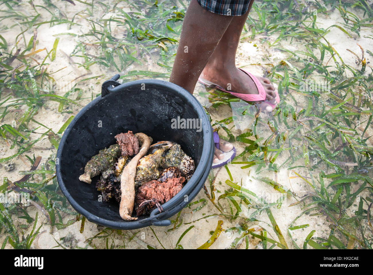 A little girl showing a bucket containing marine products collected at seagrass bed during low tide in Raja Ampat, - Stock Image
