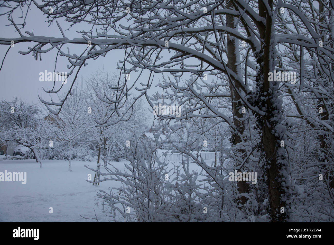 Snow, settled on the branches of trees and on the ground makes a magical wonderland Stock Photo