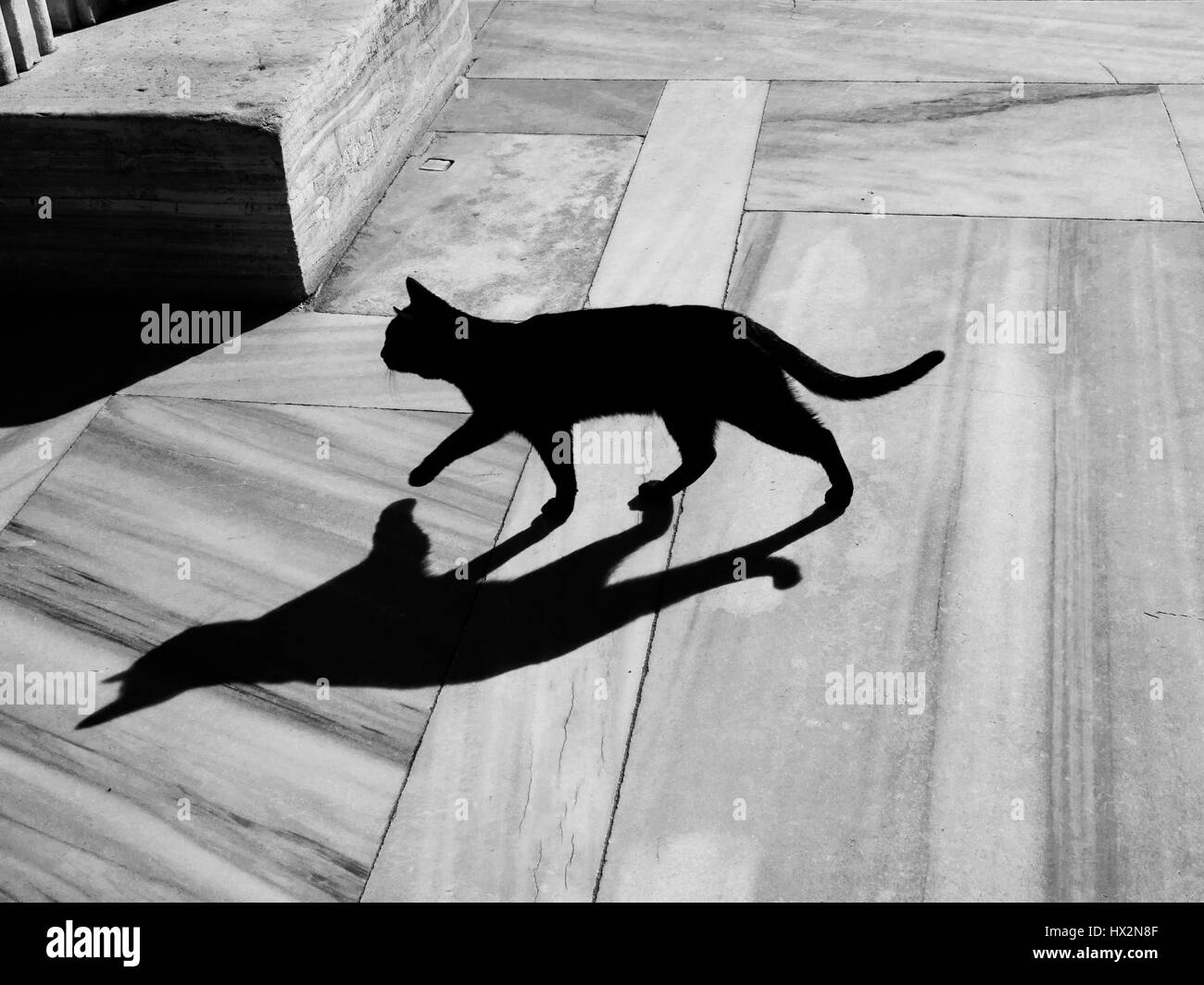 Image result for shadows on a sunny porch with cat