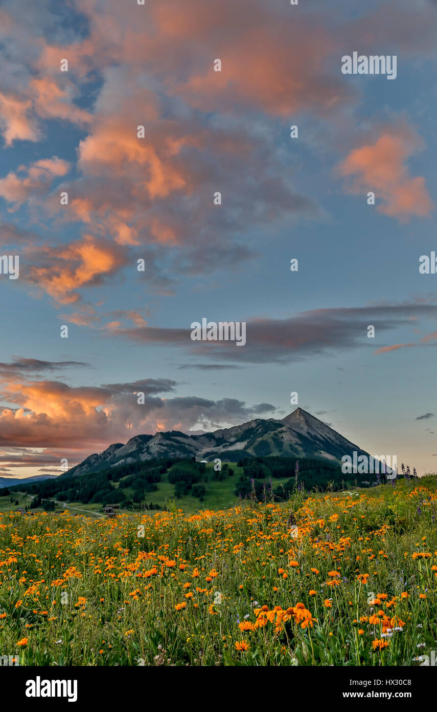 Wildflowers and Mt. Crested Butte (12,162 ft.), Gunnison National Forest, near Crested Butte, Colorado USA - Stock Image