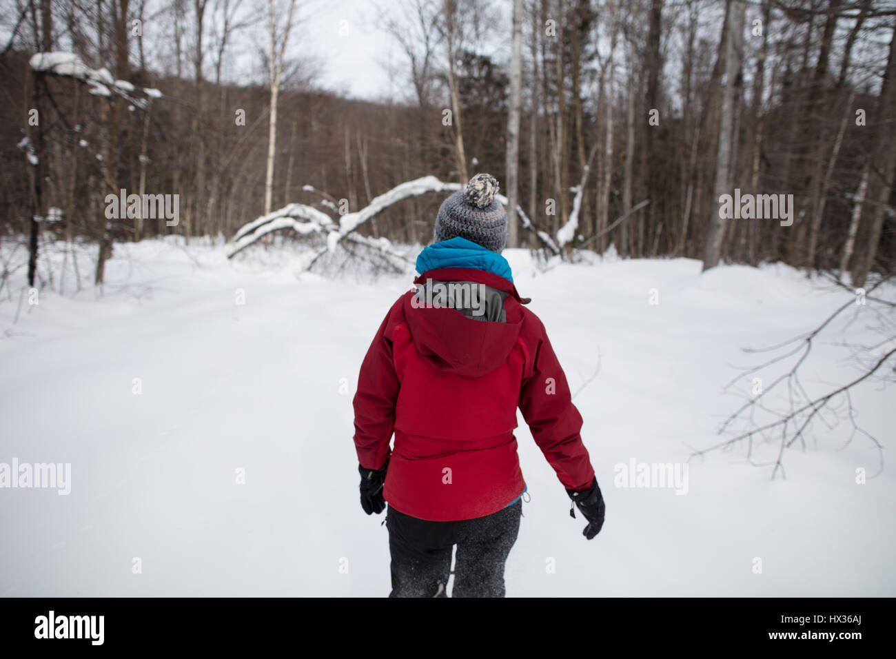 A lady in a red jacket snowshoes in the forest after a snow storm in Hastings Highlands, Ontario, Canada. - Stock Image