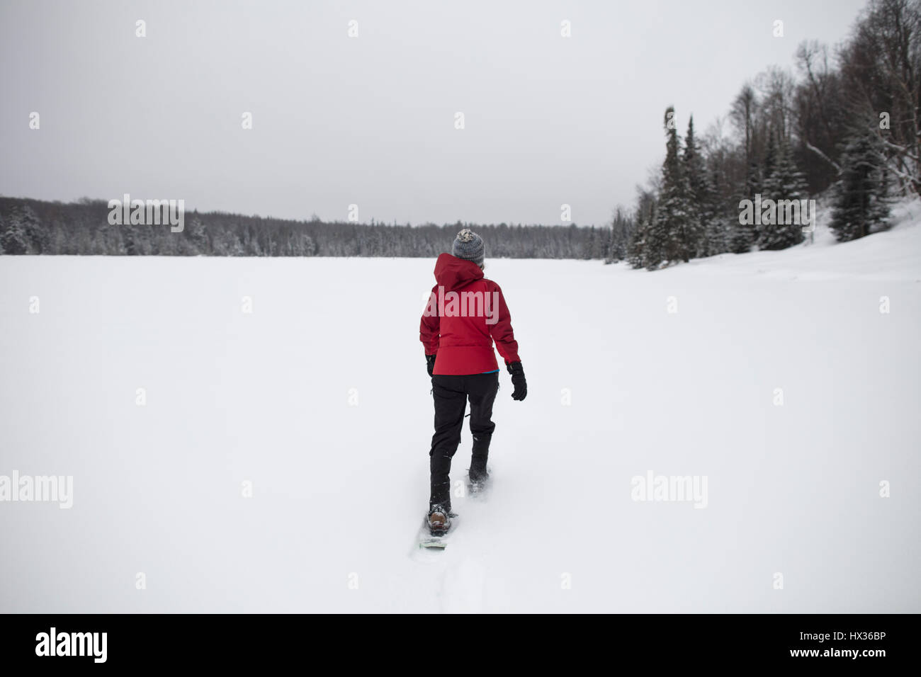 A lady in a red jacket snowshoes after a snow storm in Hastings Highlands, Ontario, Canada. - Stock Image