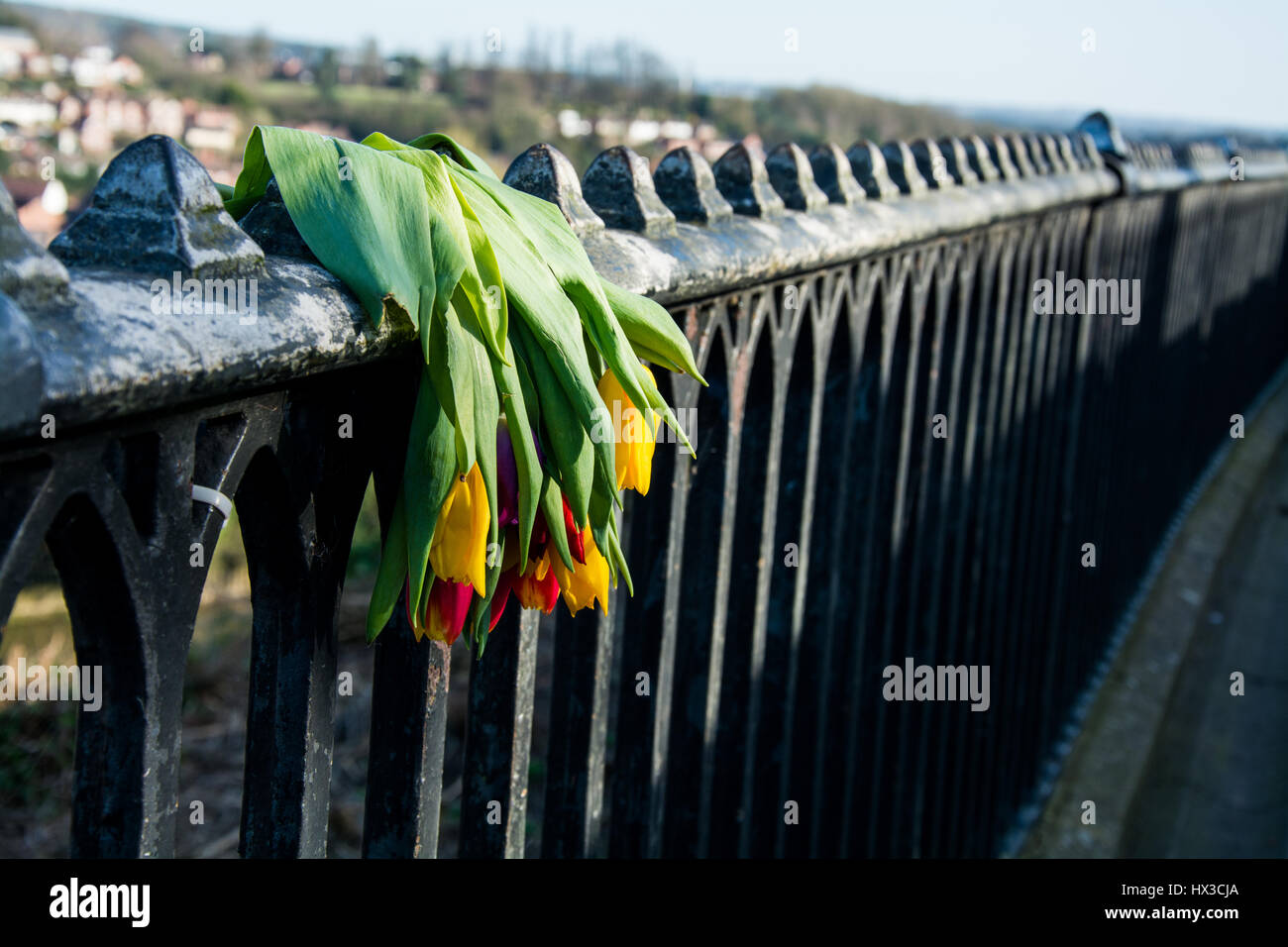 Bunch of red and yellow tulips drooping over a railing. Symbolic of sadness, grief and loss. - Stock Image