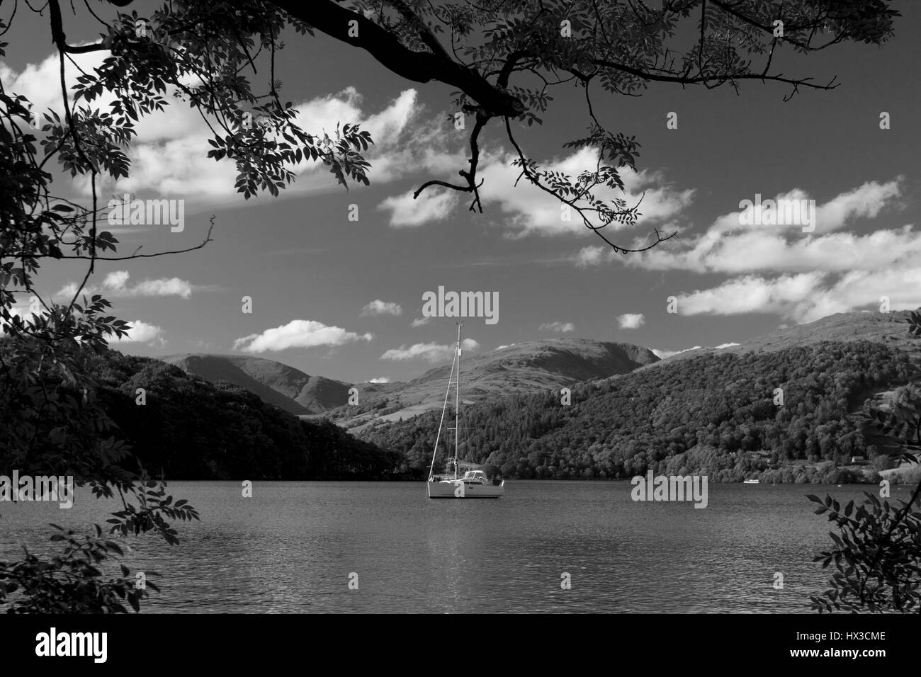 Sail boat on Lake Windermere from Claife CP area Lake District Cumbria England - Stock Image