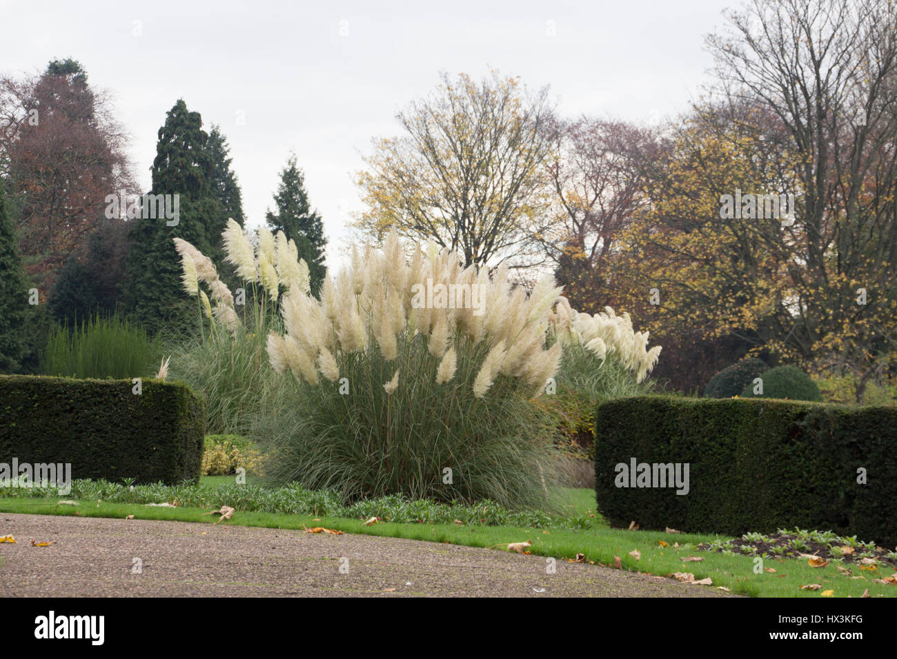 Oriental grass in a park - Stock Image