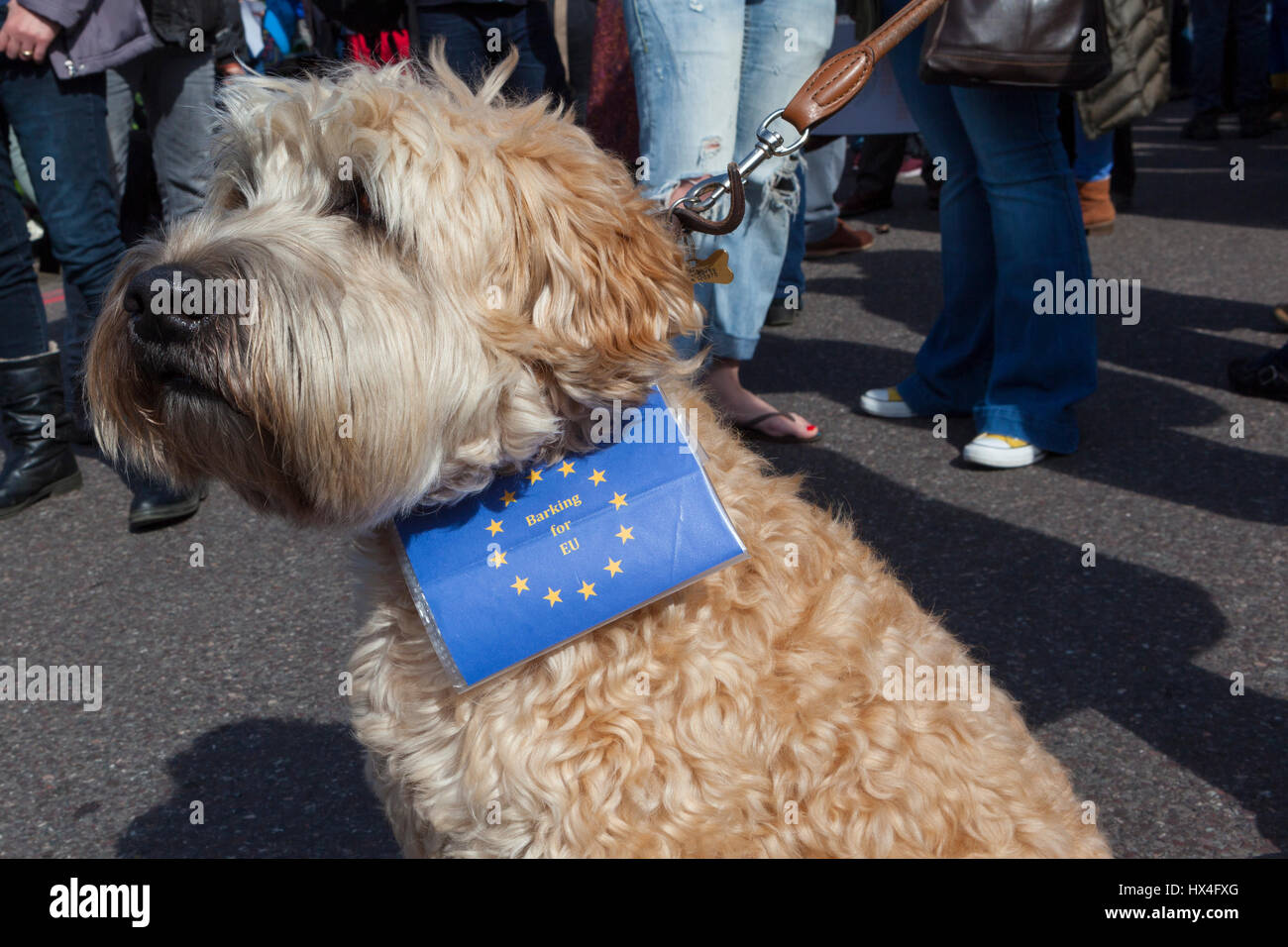 London UK 25th March, 2017. A dog with a European flag tied to his coller joins in at the Unite for Europe March - Stock Image