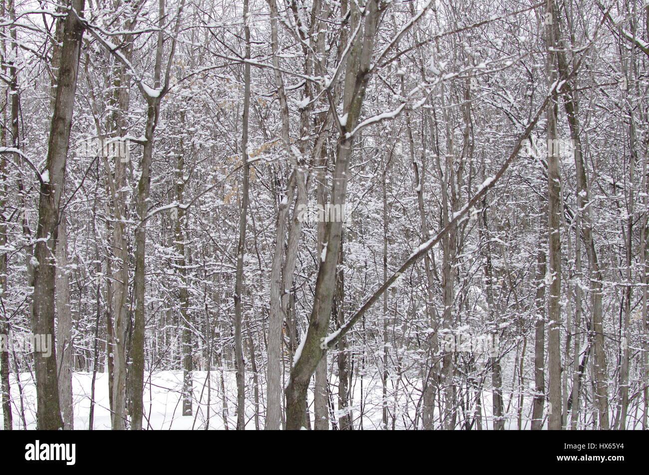 Spring snow storm - Stock Image