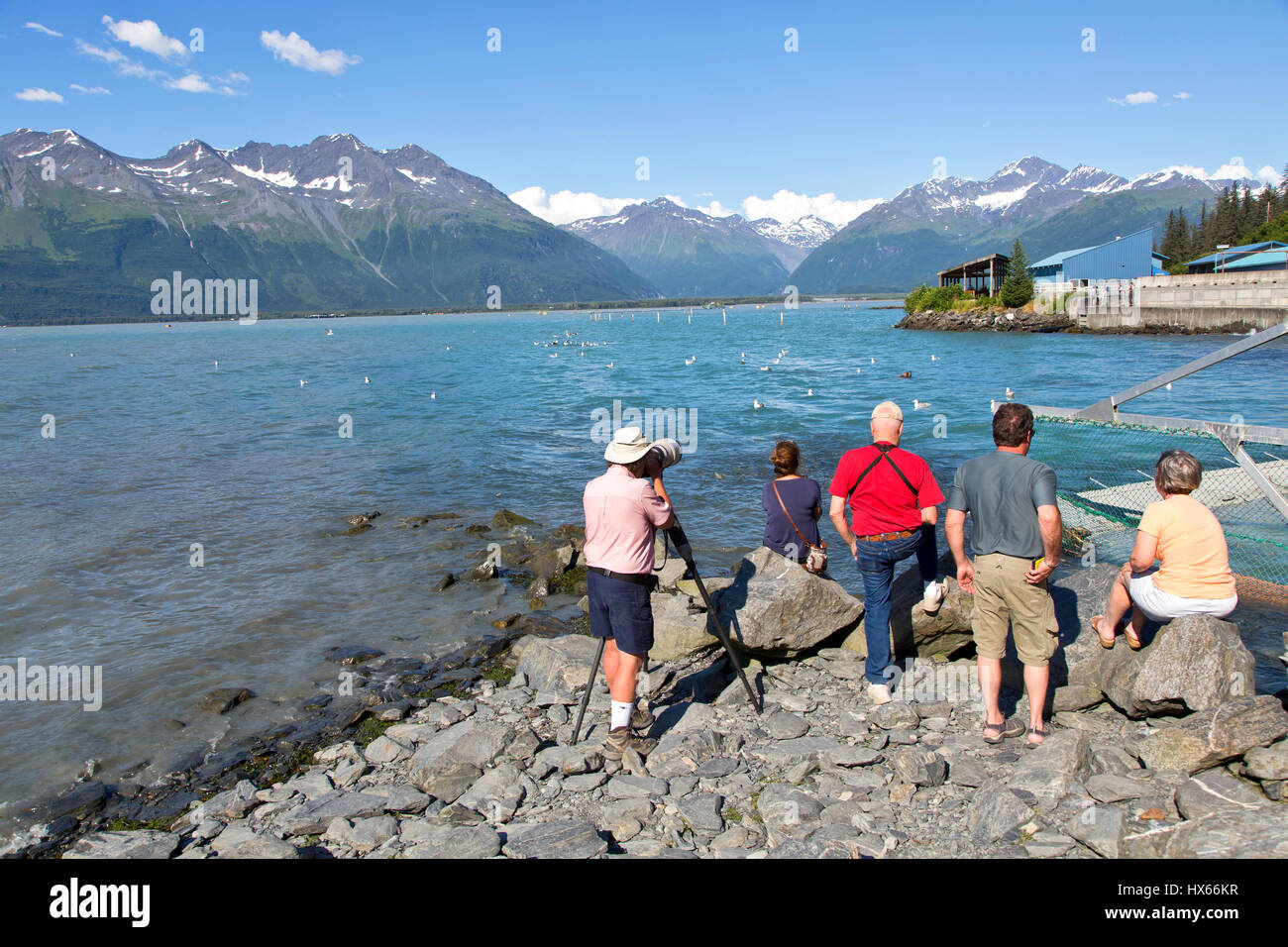 Visitors viewing & photographing sea lions & sea gulls, Salmon spawning, Chugach Mountain Range with glaciers - Stock Image