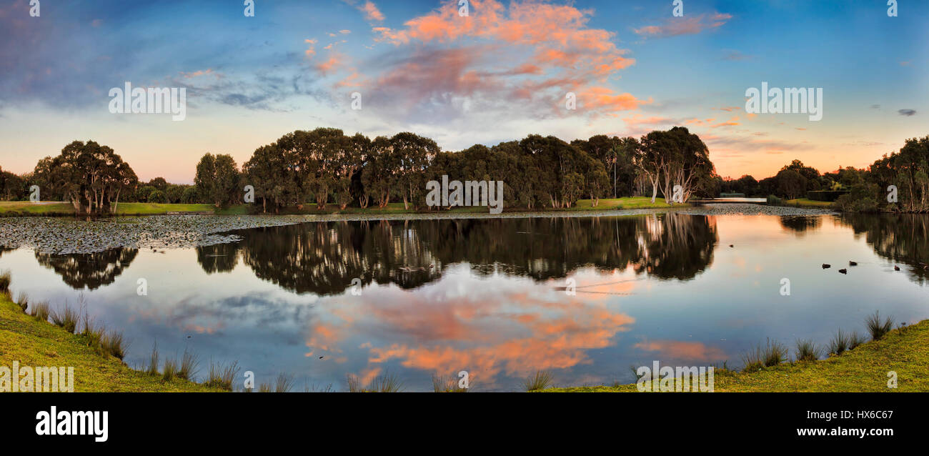 Wide panorama within Sydney centennial park along still water of pond with water lilies surrounded by paperbark - Stock Image