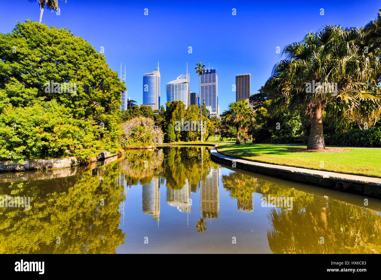 Sydney city Royal Botanic garden pond reflecting CBD skyscrapers surrounded by green exotic trees - Stock Image