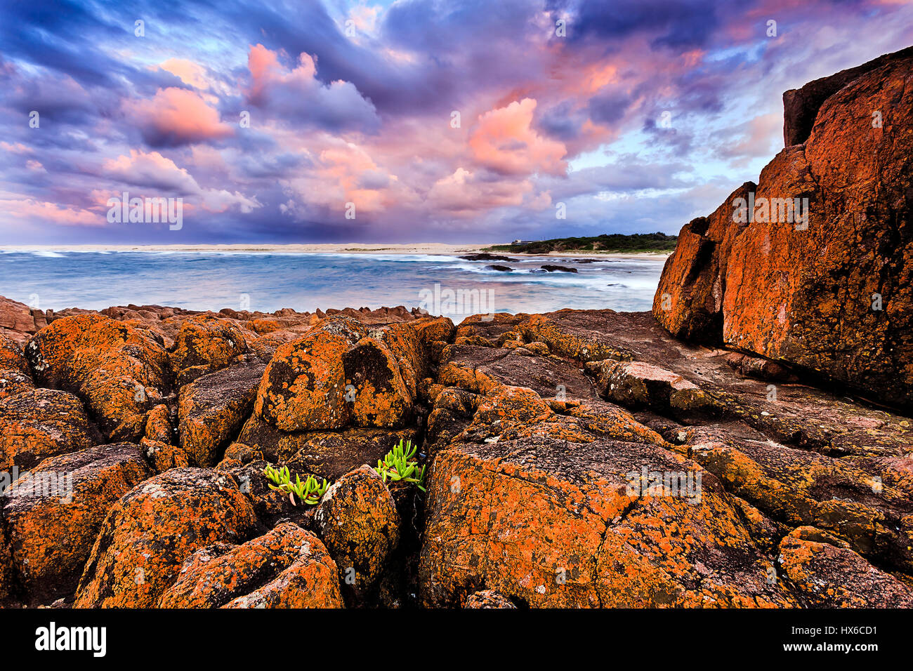 Red sandstone coastal rocks and boulders covered by bacteria which make them red with tiny green plant on harsh - Stock Image