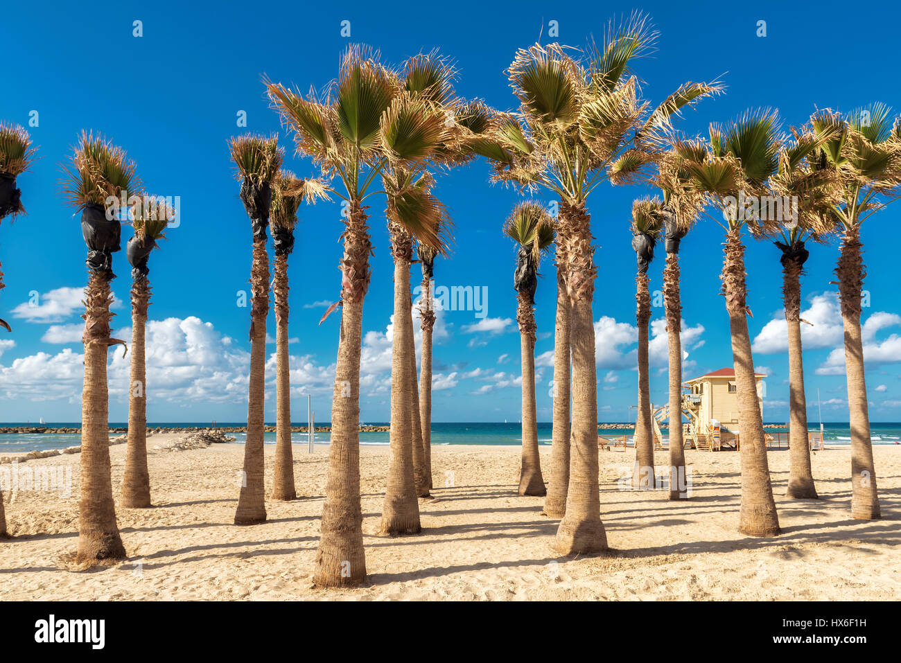 Palm trees on Tel Aviv sand beach, Israel. - Stock Image