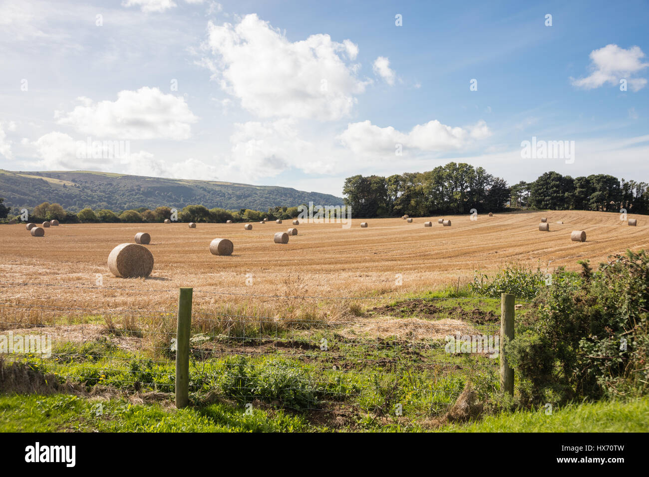 Huge bales of freshly cut hay on farmland in the Isle of Man await collection and storage - Stock Image