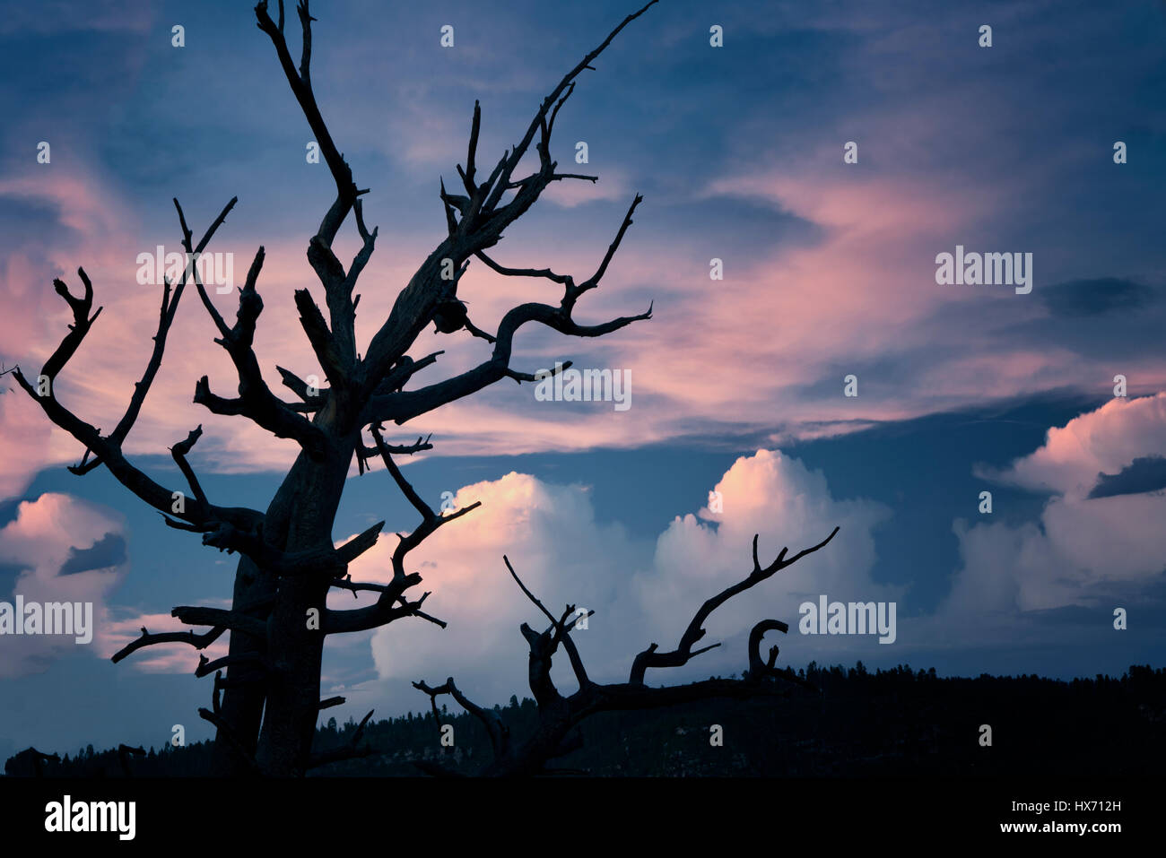 View of dead tree and sunset  from Bright Angel Point. North Rim of Grand Canyon National Park, Arizona - Stock Image