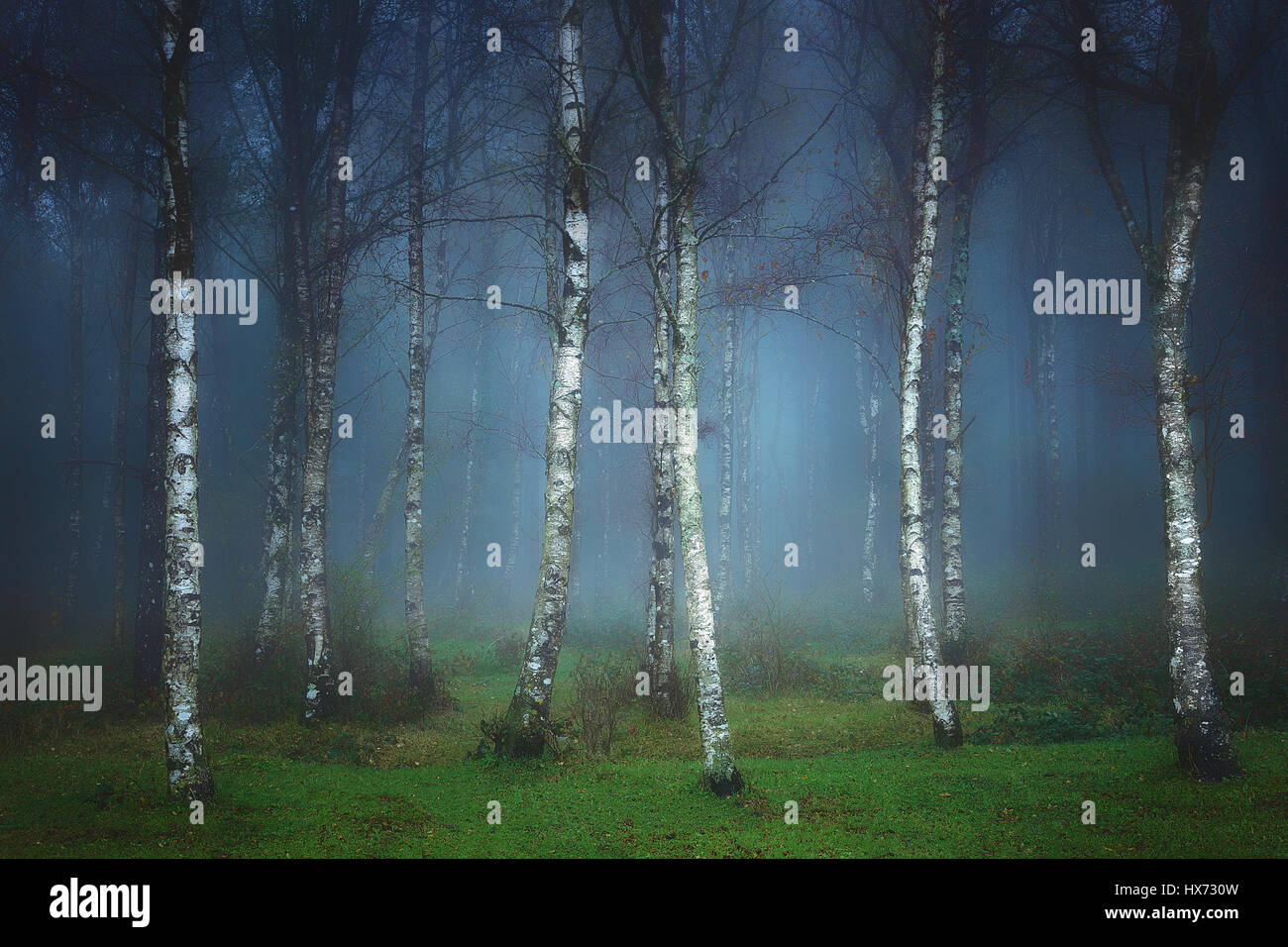 landscape of dark forest with fog - Stock Image