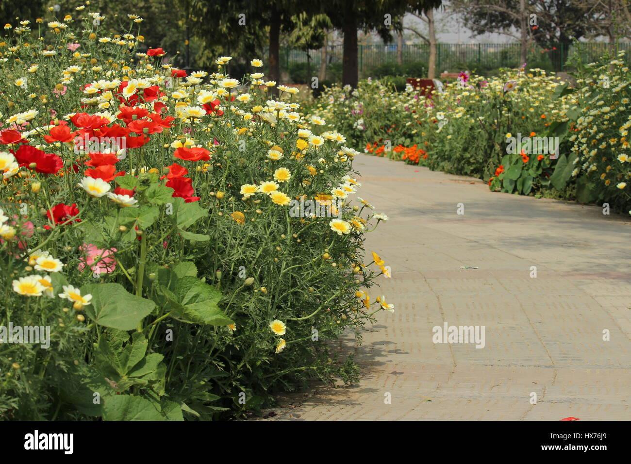Spring Flowers At Japanese Park Rohini New Delhi India Stock