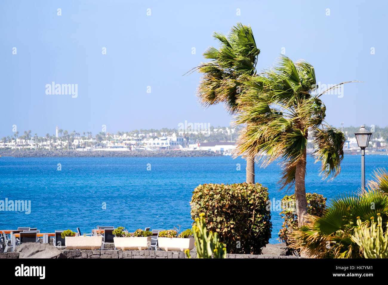 Strong winds blow the palms fronds on a tree horizontal on an otherwise fine sunny day in Lanzarote, Spain - Stock Image