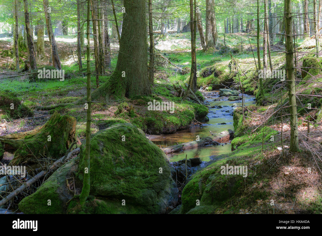 Idyllic Bavarian Forest - Stock Image