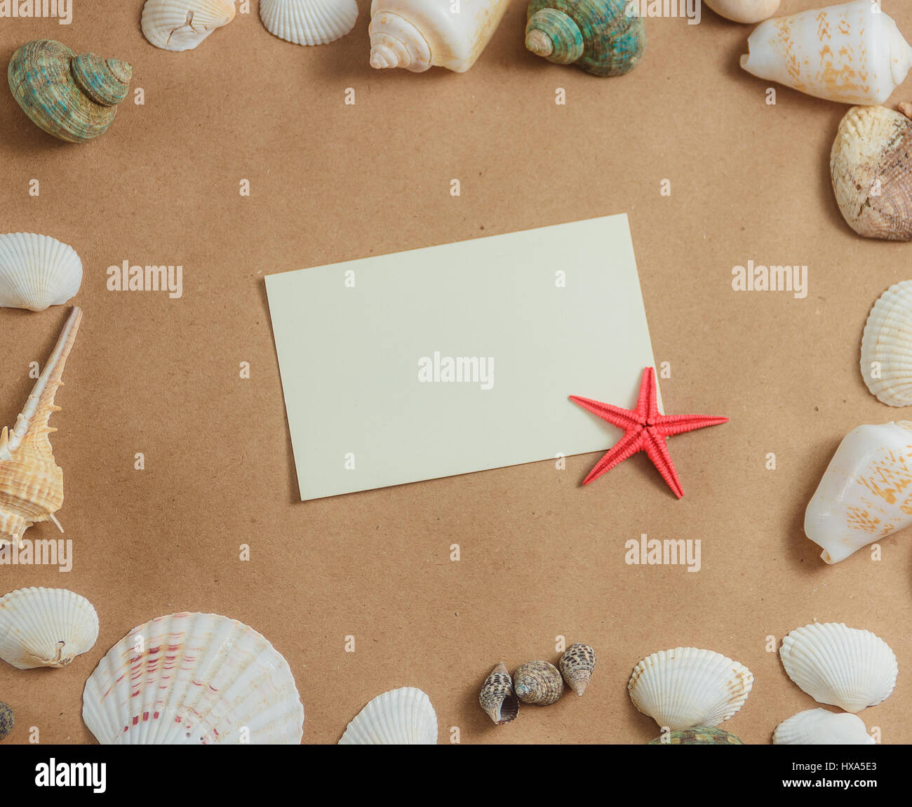frame of seashells on light background with blank card and starfish. flat view. - Stock Image