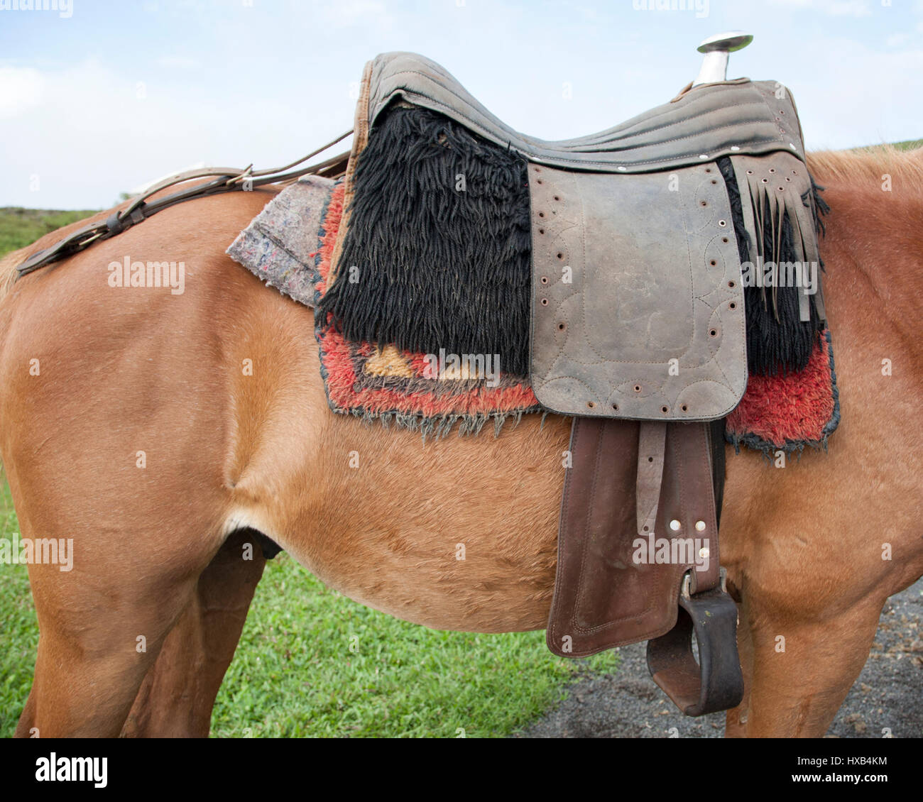 Western Saddle On Criollo Horse Ready To Carry Visitors On Trail Ride Stock Photo Alamy