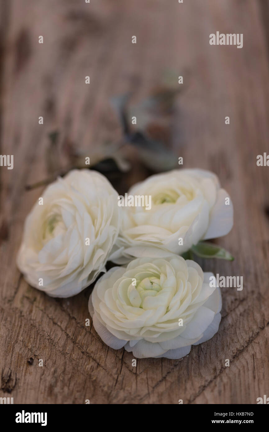 Three White Ranunculus Flower Over Wooden Tabletop With One Stock