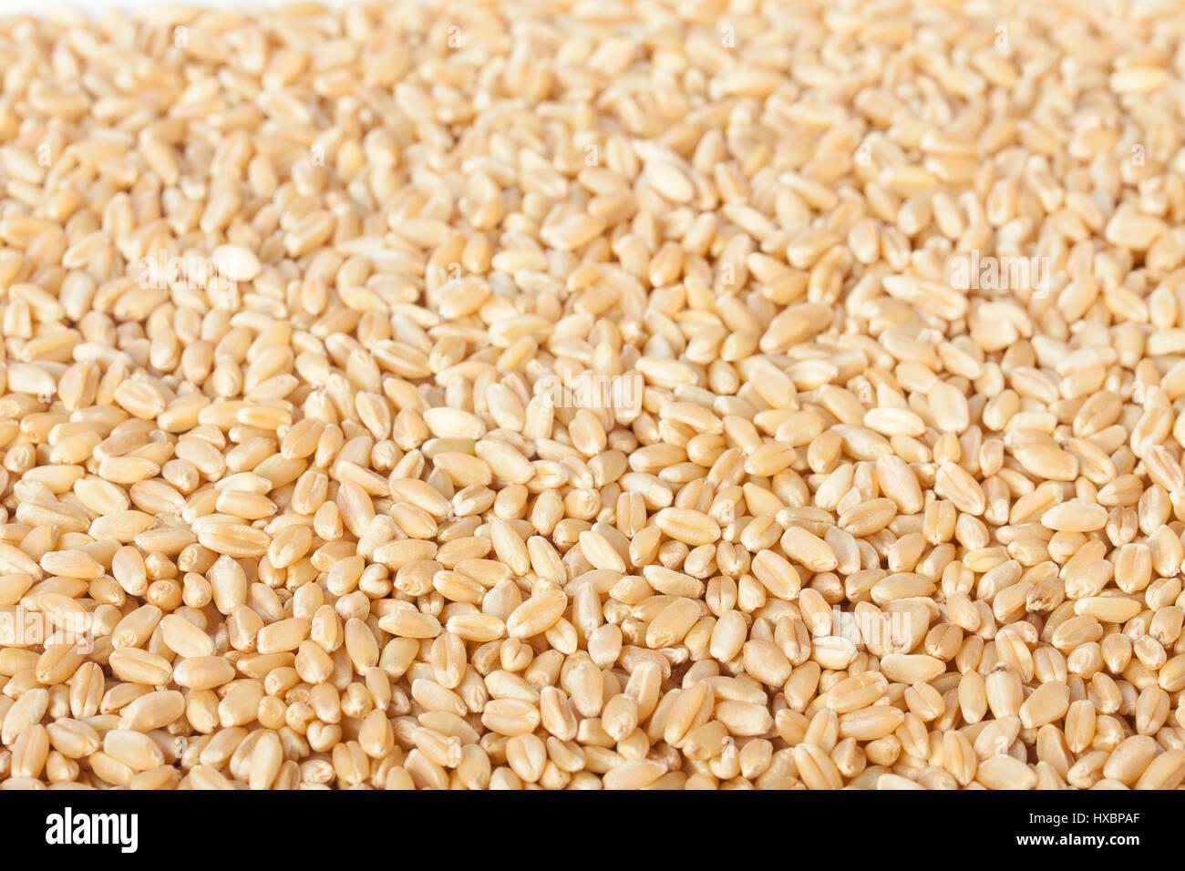 Wheat grain close up - Stock Image