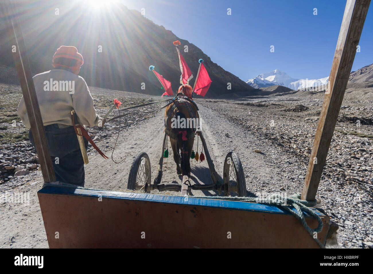 Pony cart ride to Mount Everest tourist North base camp - Stock Image