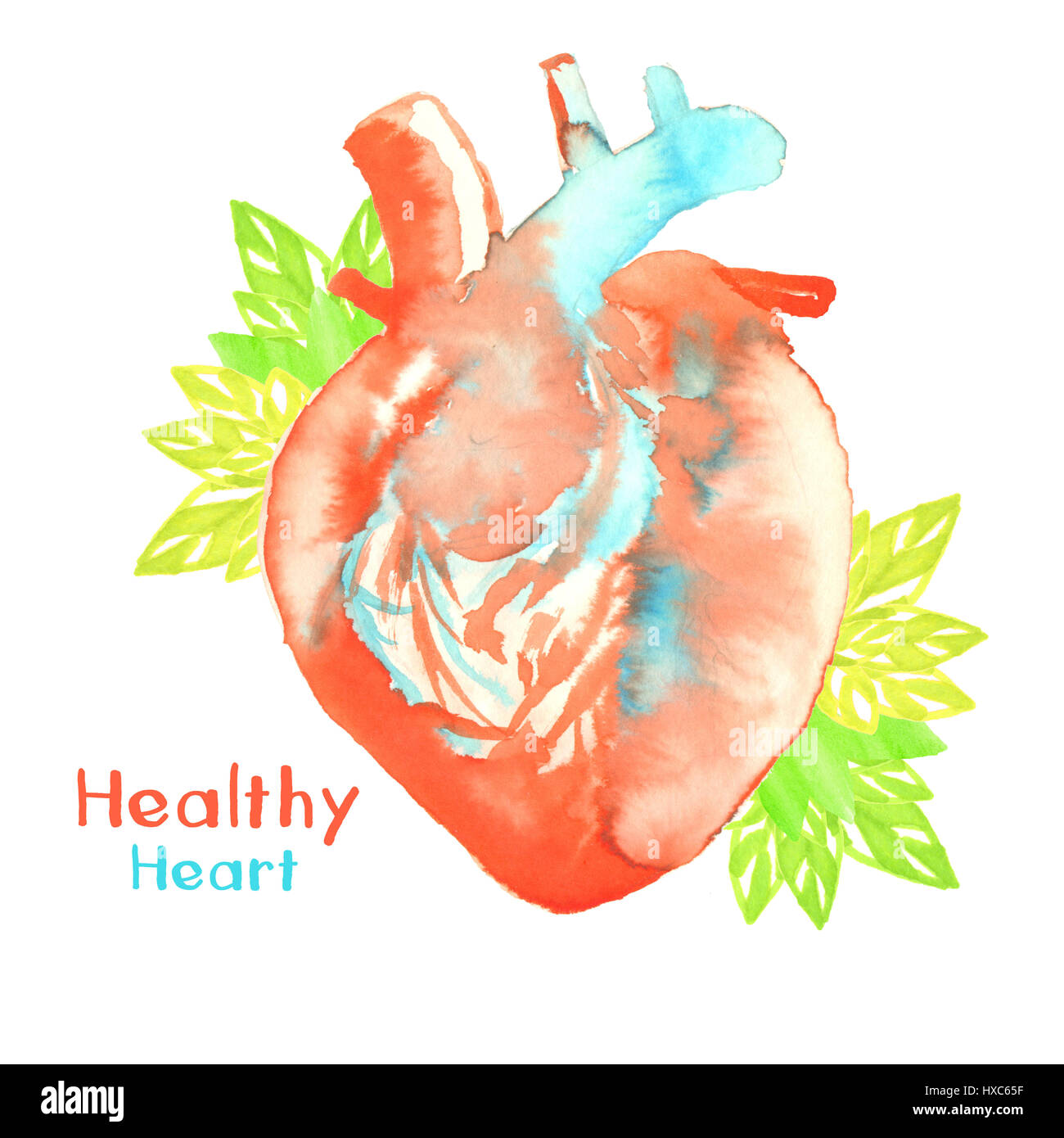 watercolor illustration of healthy heart - Stock Image