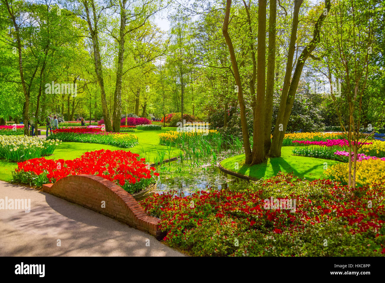 Colorful tulips in the Keukenhof park, Holland - Stock Image