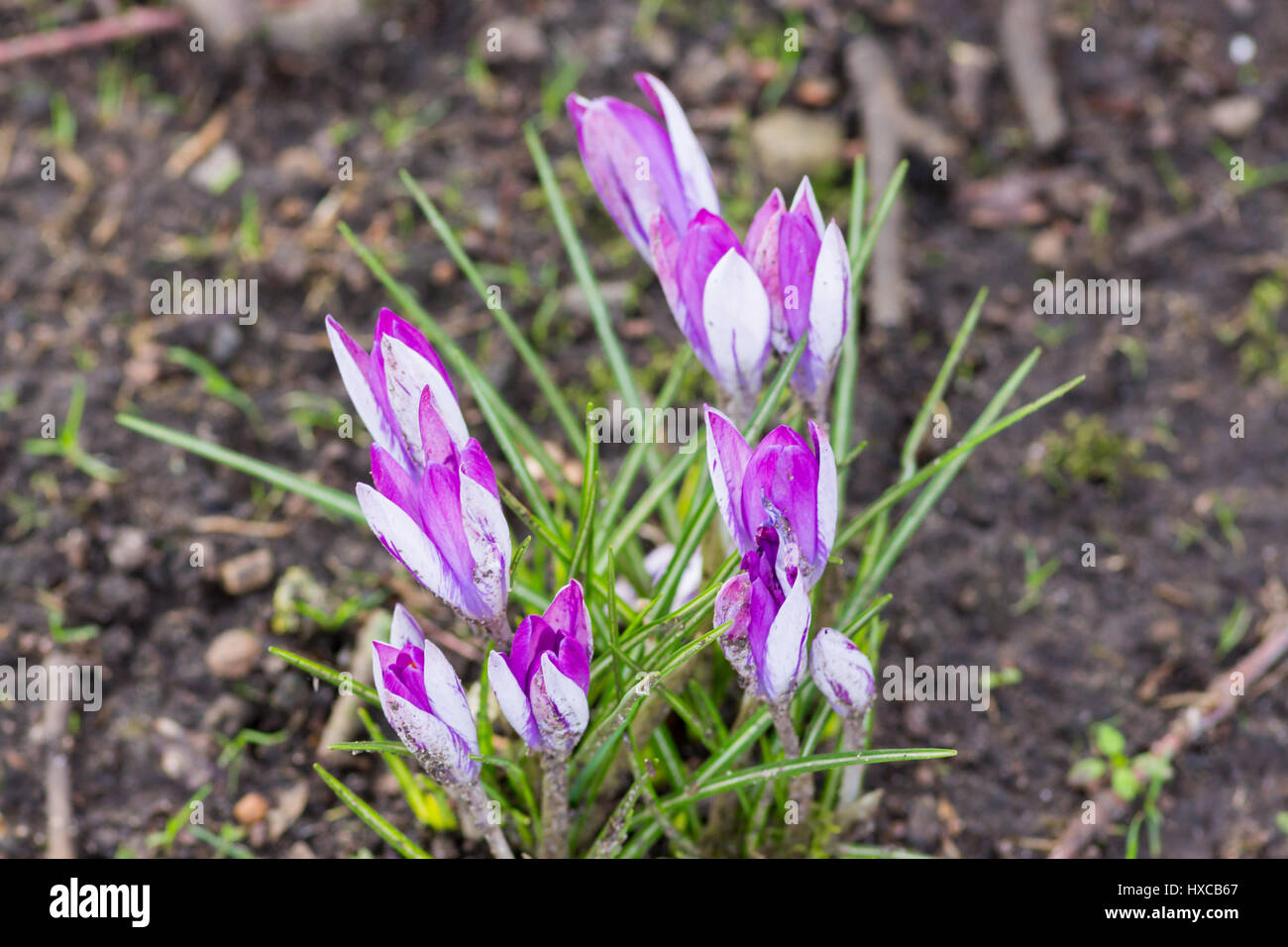 Spring Flowers Uk Stock Photos Spring Flowers Uk Stock Images Alamy